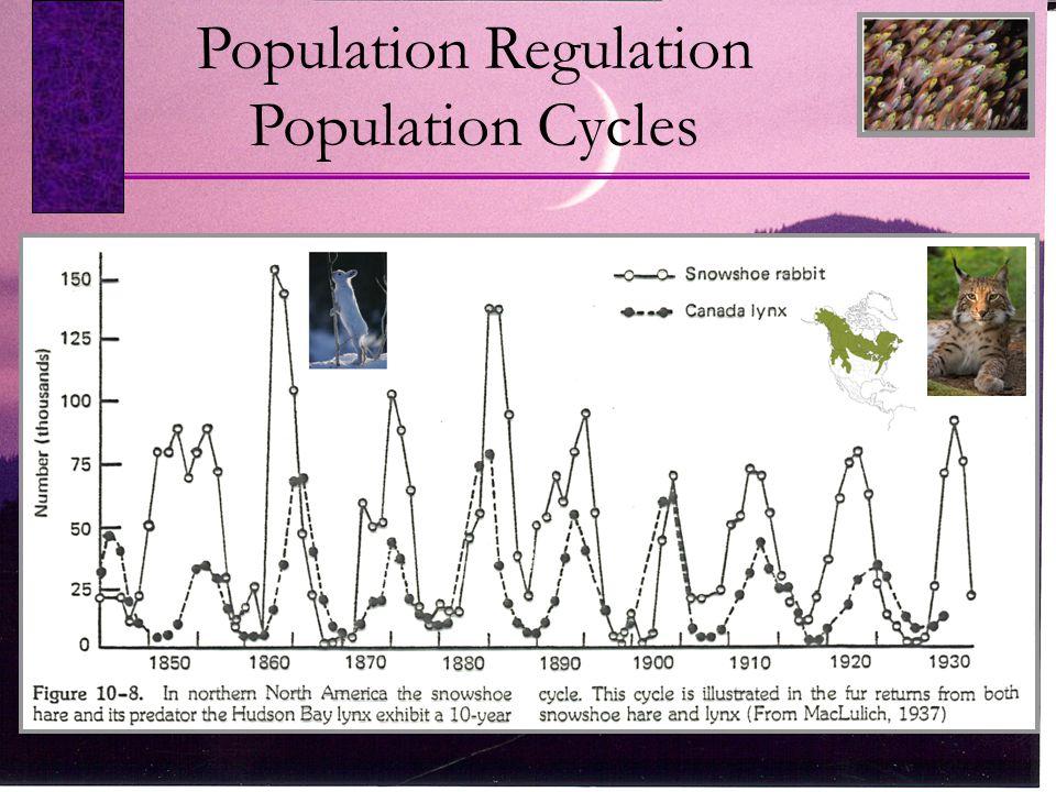 Population Regulation Population Cycles