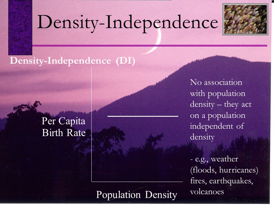 No association with population density – they act on a population independent of density - e.g., weather (floods, hurricanes) fires, earthquakes, volcanoes Density-Independence (DI) Density-Independence Population Density Per Capita Birth Rate