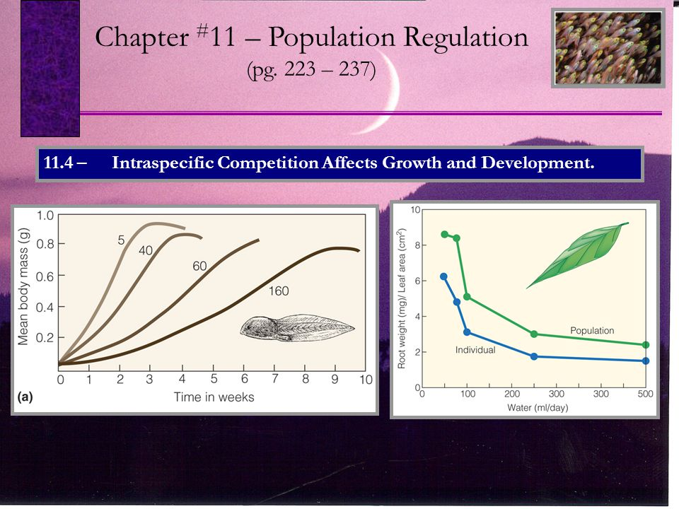 11.4 – Intraspecific Competition Affects Growth and Development.