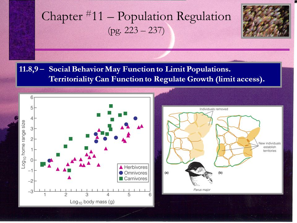 Chapter # 11 – Population Regulation (pg.