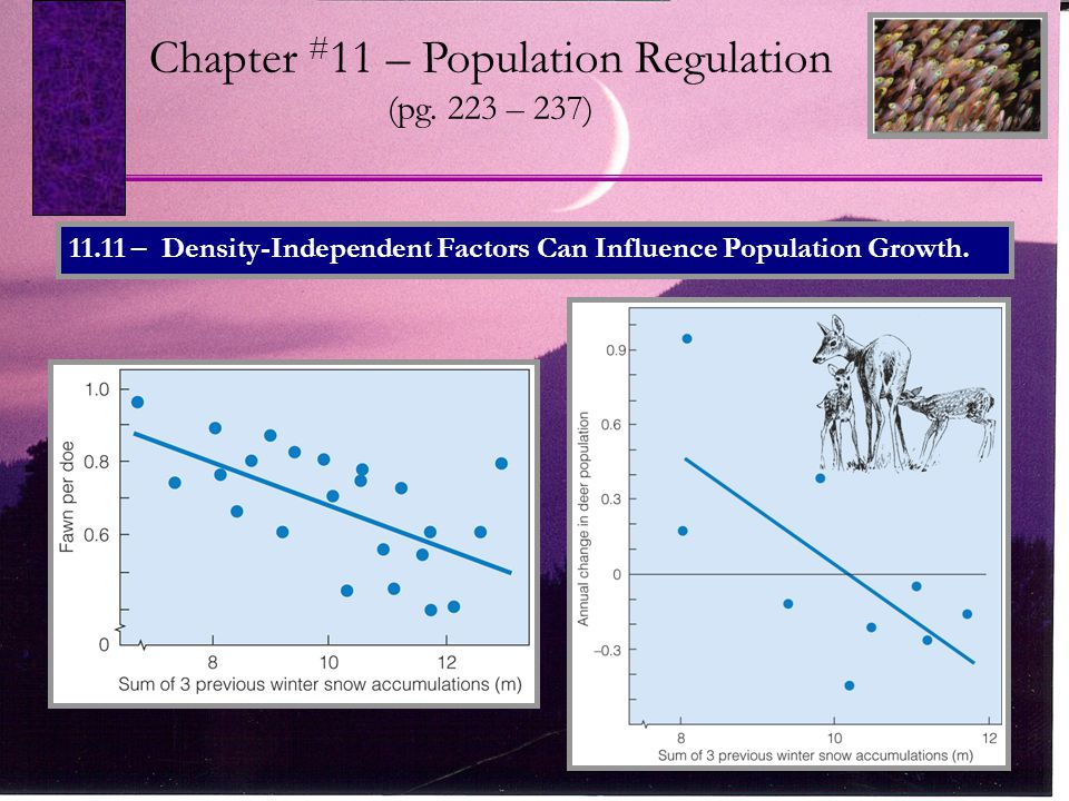 Chapter # 11 – Population Regulation (pg. 223 – 237) 11.11 – Density-Independent Factors Can Influence Population Growth.