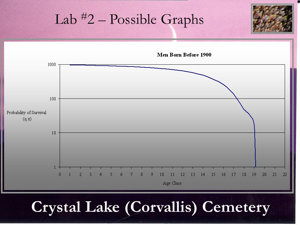Falls City Cemetery Lab # 2 – Possible Graphs