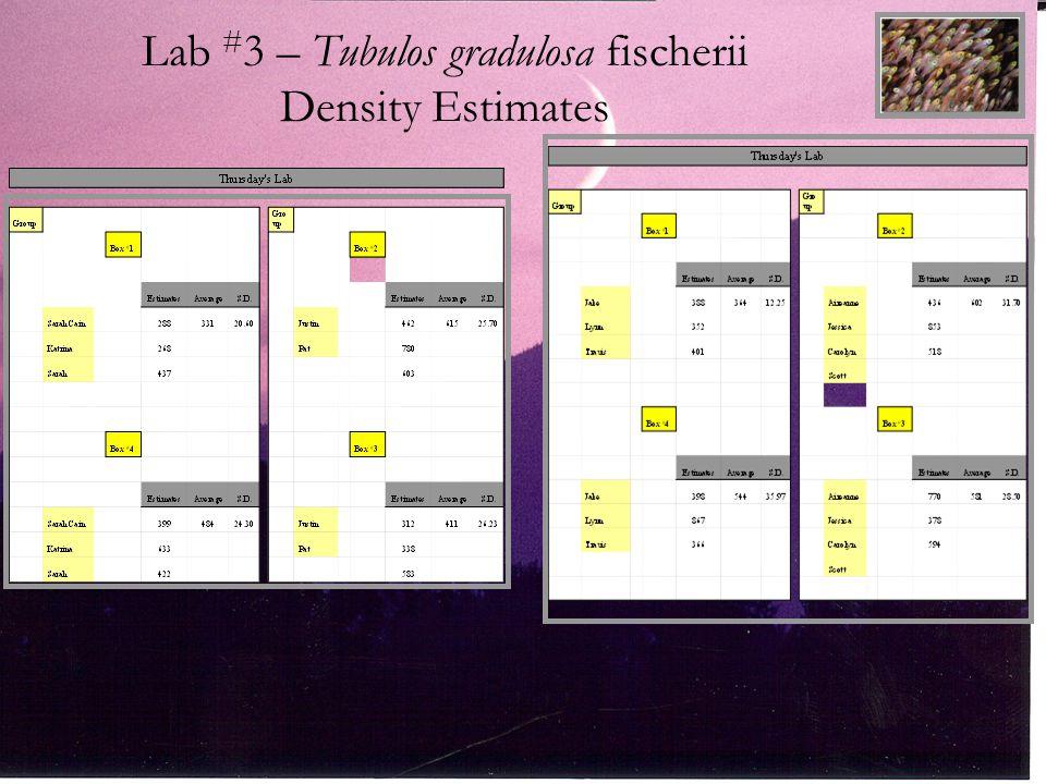 Lab # 3 – Tubulos gradulosa fischerii Density Estimates