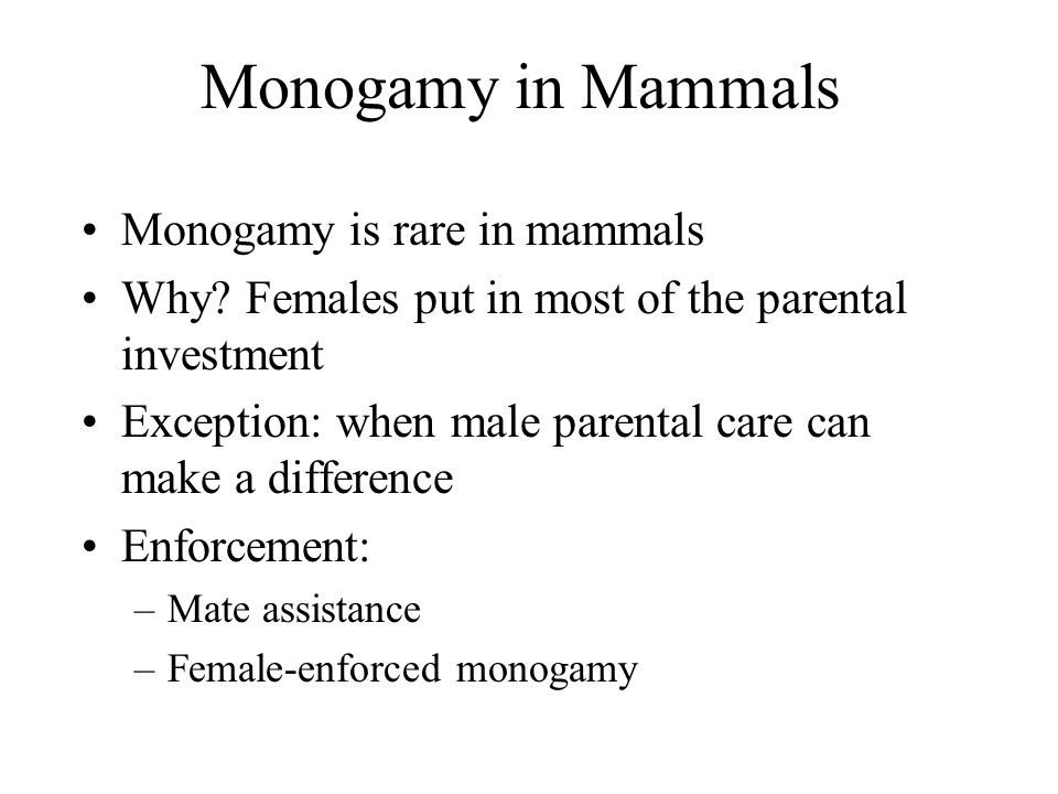 Monogamy in Mammals Monogamy is rare in mammals Why.