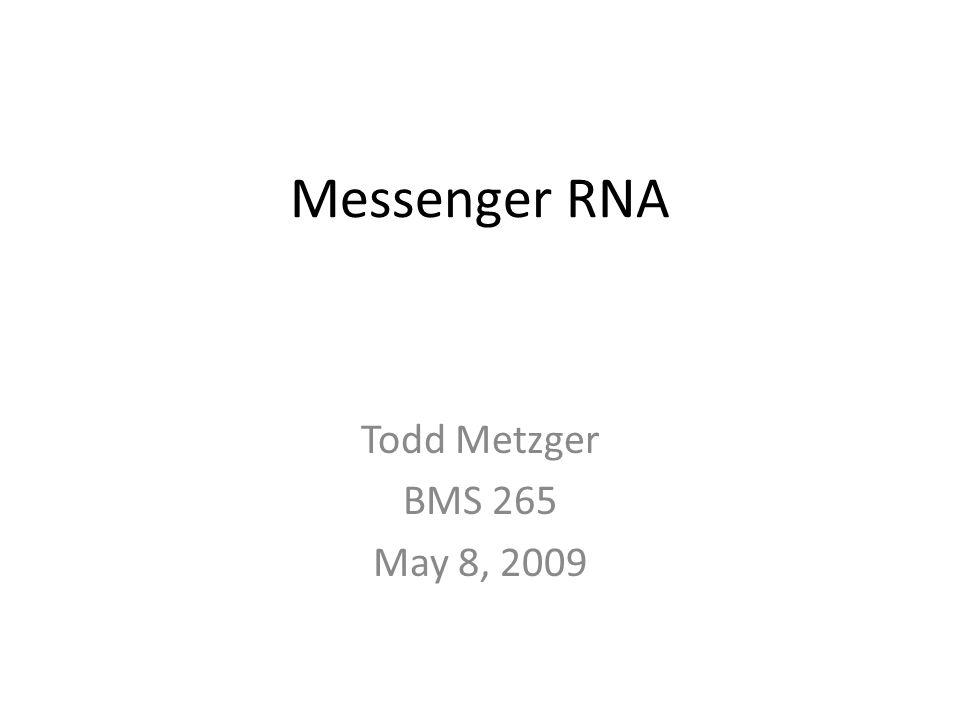 Messenger RNA Todd Metzger BMS 265 May 8, 2009