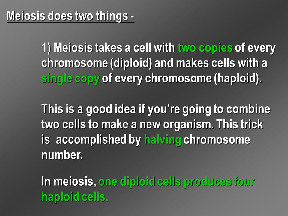 Meiosis does two things - 1) Meiosis takes a cell with two copies of every chromosome (diploid) and makes cells with a single copy of every chromosome