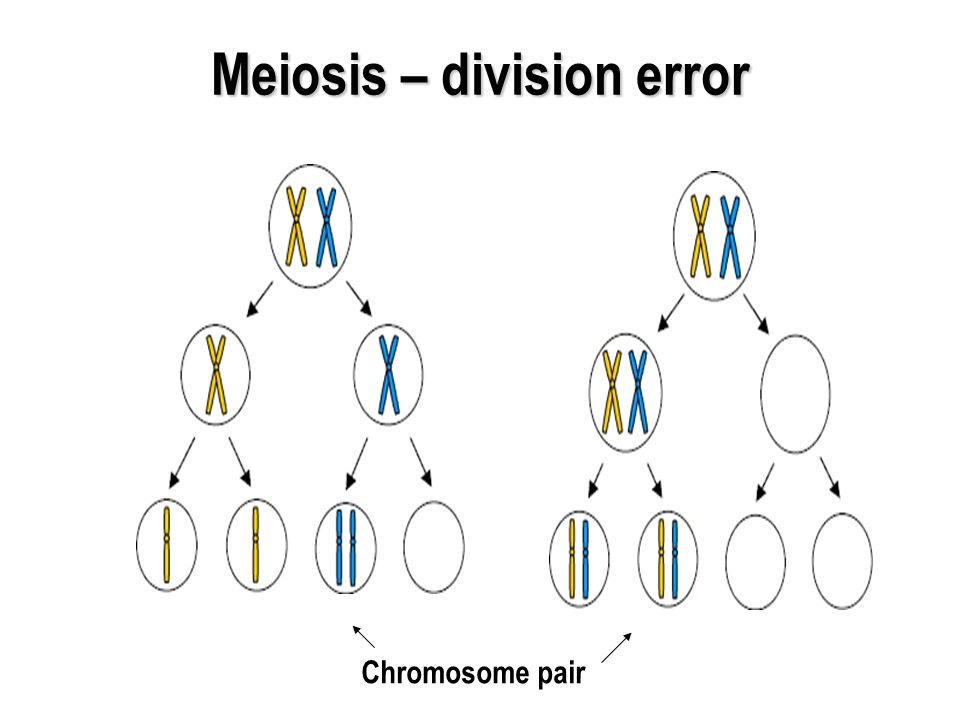 Meiosis error - fertilization Should the gamete with the chromosome pair be fertilized then the offspring will not be 'normal'.