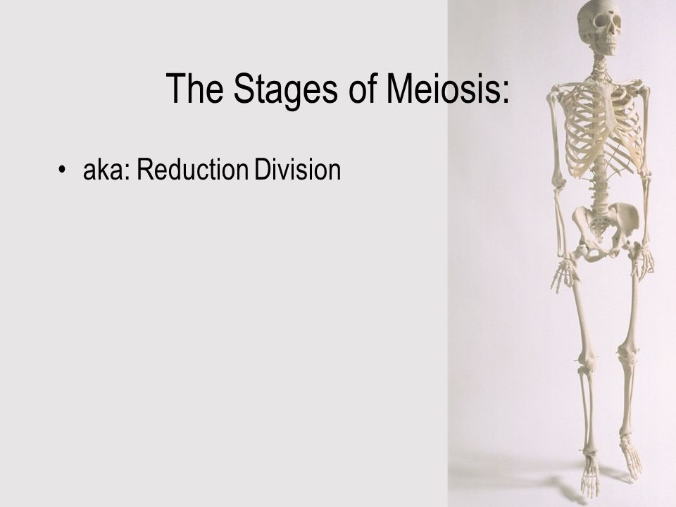 The Stages of Meiosis: aka: Reduction Division