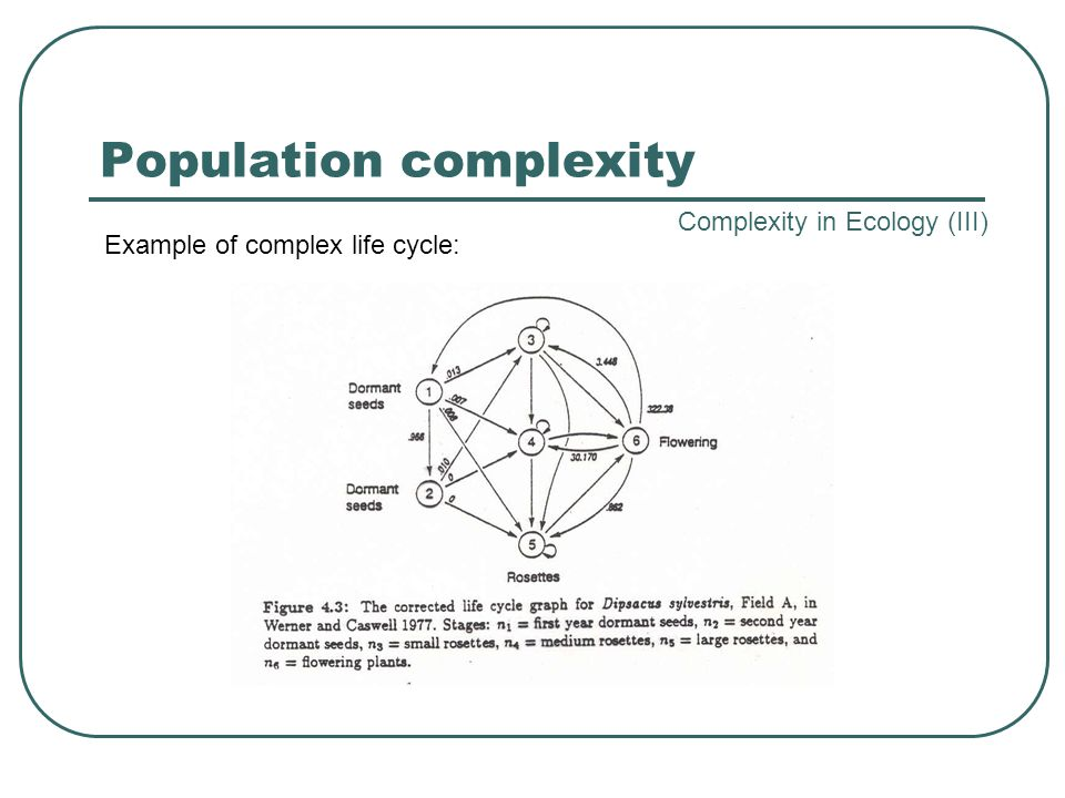 Population complexity Example of complex life cycle: Complexity in Ecology (III)