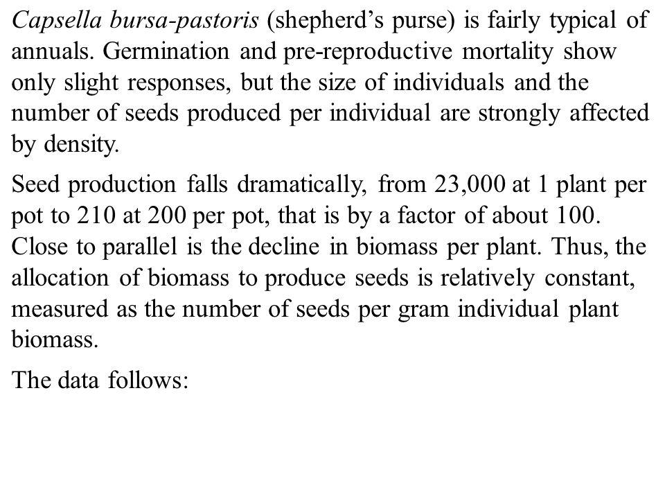 Capsella bursa-pastoris (shepherd's purse) is fairly typical of annuals.