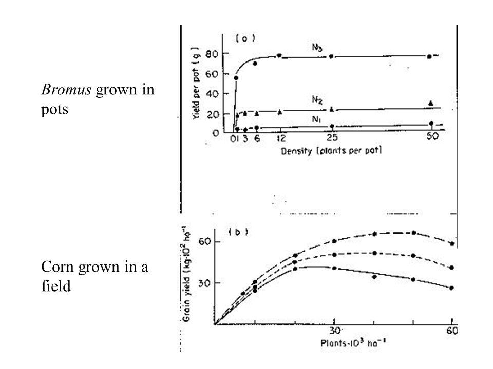 Bromus grown in pots Corn grown in a field