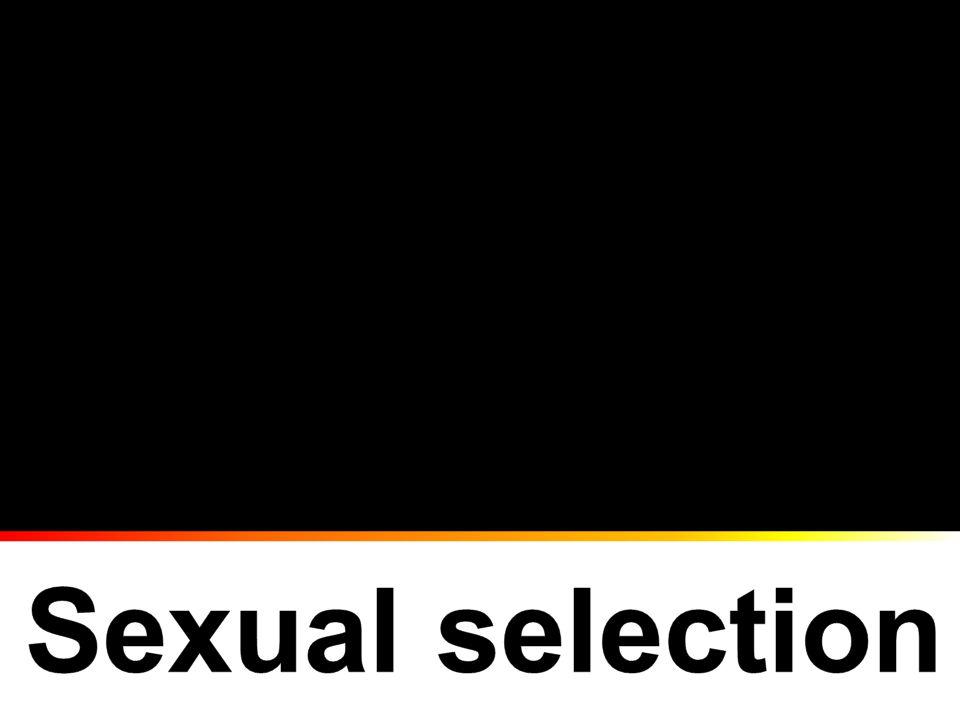 Asexual and sexual organismsAsexual and sexual organisms Sex and genderSex and gender Sexual selectionSexual selection –Selection affecting access to gametes http://flickr.com/photos/billwalker/2521121709/ http://www.micrographia.com/specbiol/cnidari/hydrozo/hydr010 0/hydra-01.htm