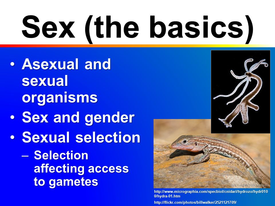 Costs of sexCosts of sex –Cost of meiosis –Breakup gene combinations –Mate acquisition –STDs Benefits of sexBenefits of sex –Adapt to changing environment AbioticAbiotic BioticBiotic http://porpax.bio.miami.edu/~cmallery/150/life/meiosis.pics.jpg