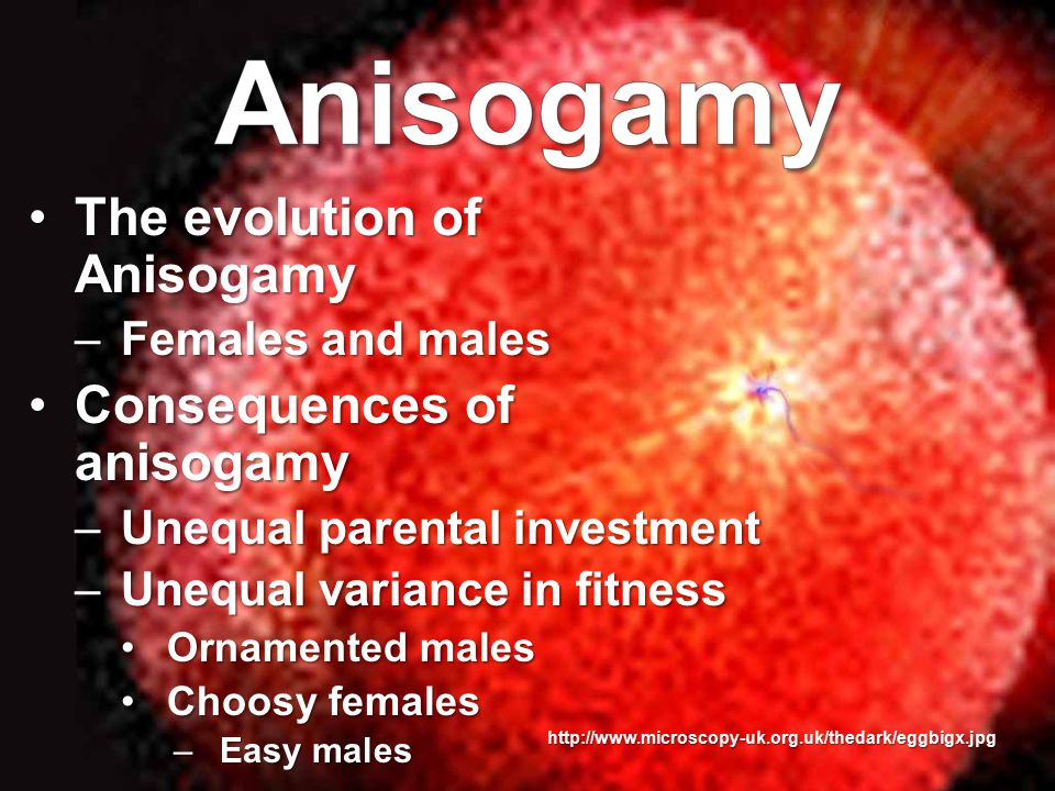 http://www.microscopy-uk.org.uk/thedark/eggbigx.jpg The evolution of AnisogamyThe evolution of Anisogamy –Females and males Consequences of anisogamyConsequences of anisogamy –Unequal parental investment –Unequal variance in fitness Ornamented malesOrnamented males Choosy femalesChoosy females –Easy males