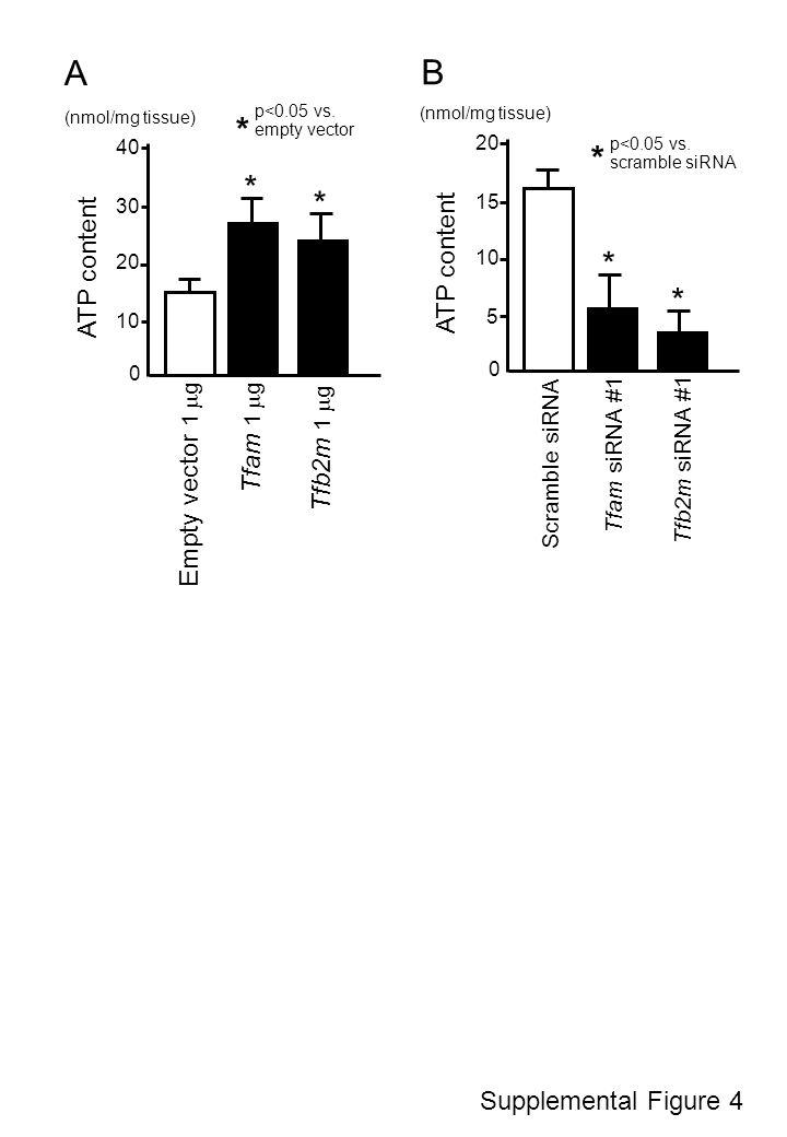 Supplemental Figure 4 A B Tfam siRNA #1 Scramble siRNA 0 15 10 5 20 * Tfb2m siRNA #1 * p<0.05 vs. scramble siRNA * ATP content (nmol/mg tissue) 0 30 2