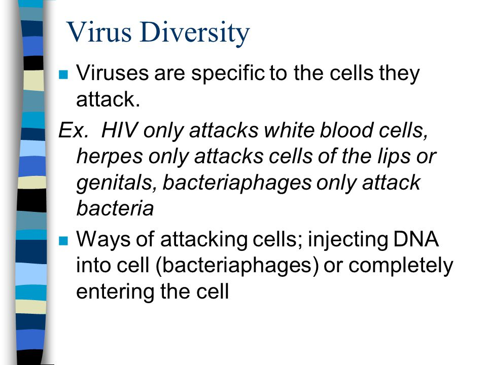 Virus Diversity n Viruses are specific to the cells they attack.