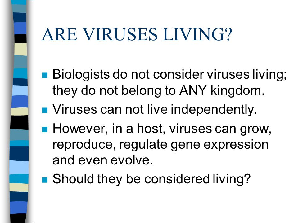 ARE VIRUSES LIVING.n Biologists do not consider viruses living; they do not belong to ANY kingdom.