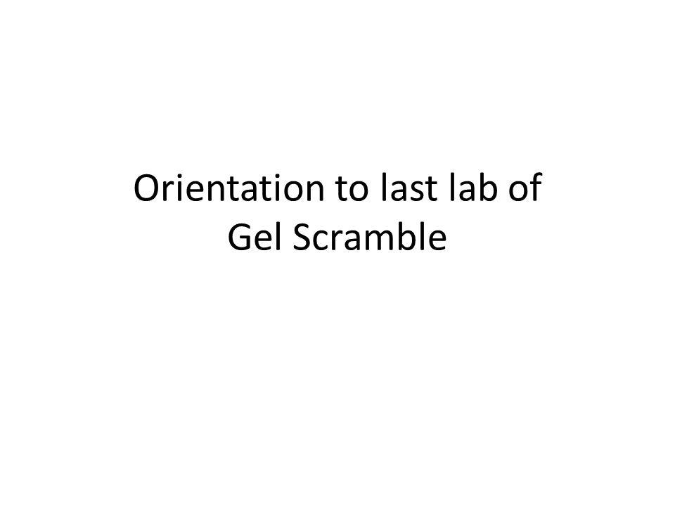 Orientation to last lab of Gel Scramble