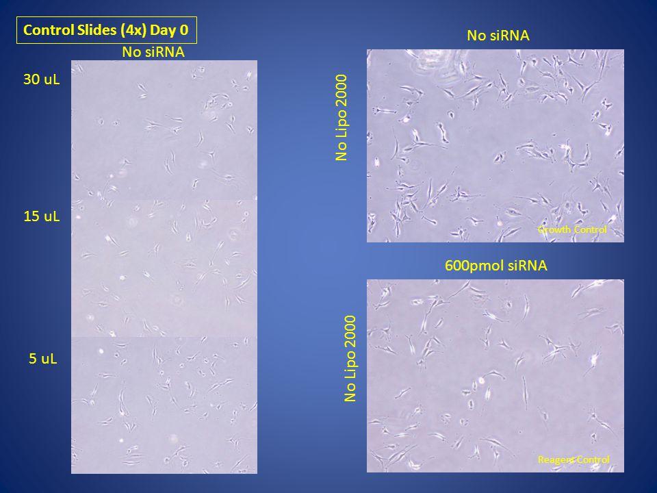 15 uL 30 uL 5 uL Control Slides (4x) Day 0 No siRNA No Lipo 2000 600pmol siRNA No Lipo 2000 Growth Control Reagent Control