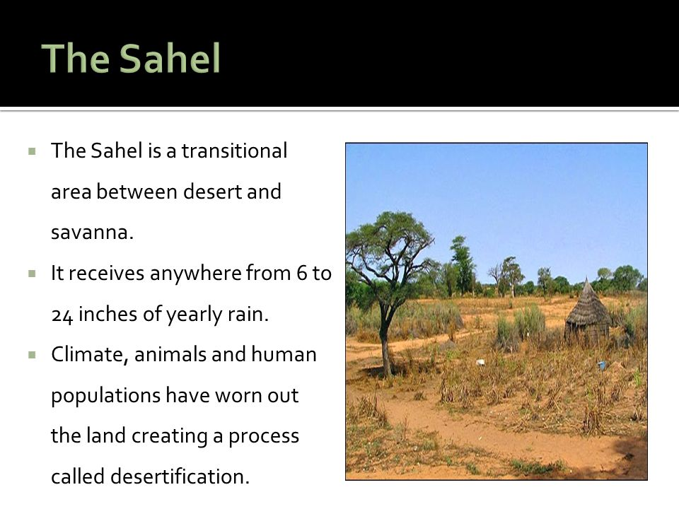  The Sahel is a transitional area between desert and savanna.  It receives anywhere from 6 to 24 inches of yearly rain.  Climate, animals and human