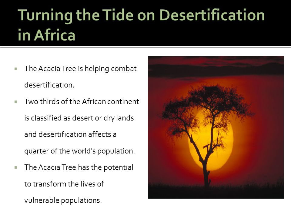  The Acacia Tree is helping combat desertification.  Two thirds of the African continent is classified as desert or dry lands and desertification af