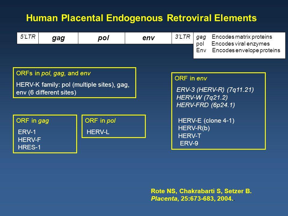 Attachment to Endometrium Endometrium Blastocyst Inner cell mass Trophectoderm