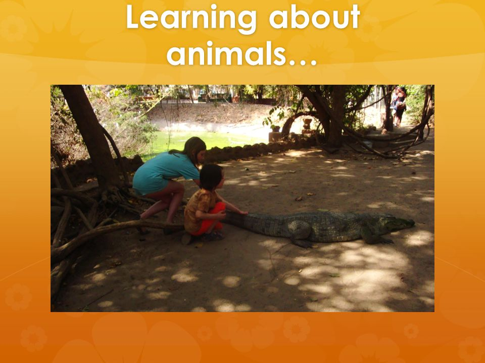 Learning about animals…