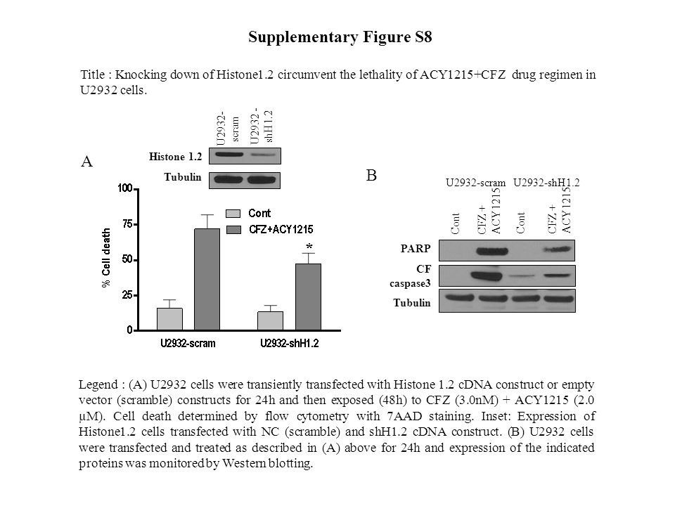 Legend : (A) U2932 cells were transiently transfected with Histone 1.2 cDNA construct or empty vector (scramble) constructs for 24h and then exposed (