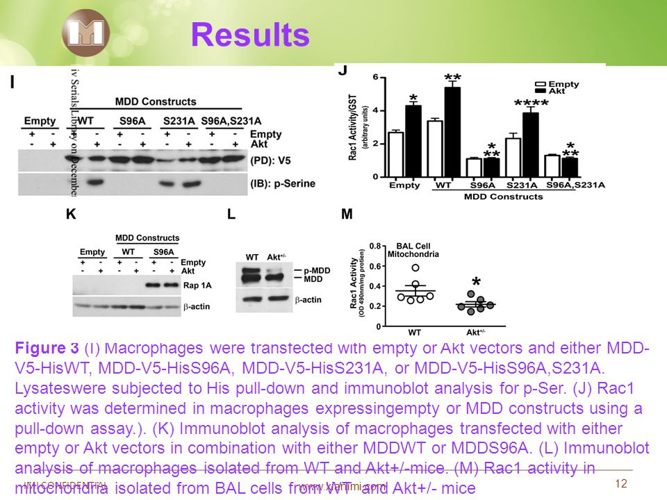 www.xianimi.com 12 IMI CONFIDENTIAL Results Figure 3 (I) Macrophages were transfected with empty or Akt vectors and either MDD- V5-HisWT, MDD-V5-HisS9