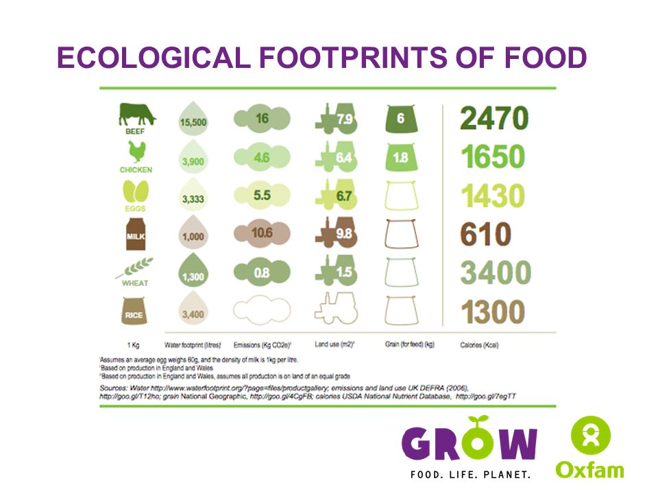 ECOLOGICAL FOOTPRINTS OF FOOD