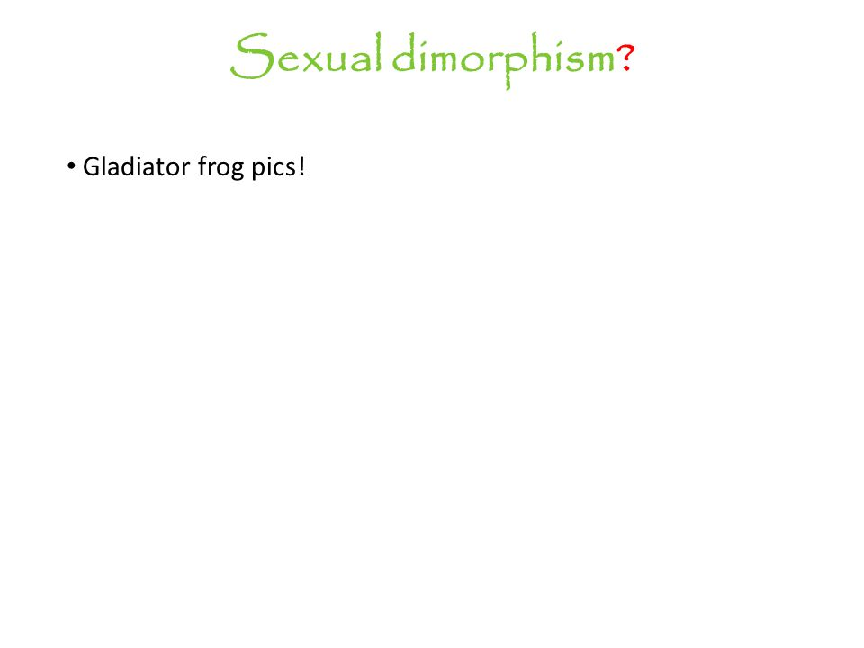 Sexual dimorphism Gladiator frog pics!
