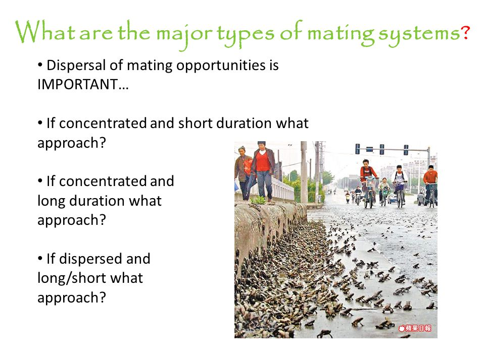 What are the major types of mating systems? Scramble approach