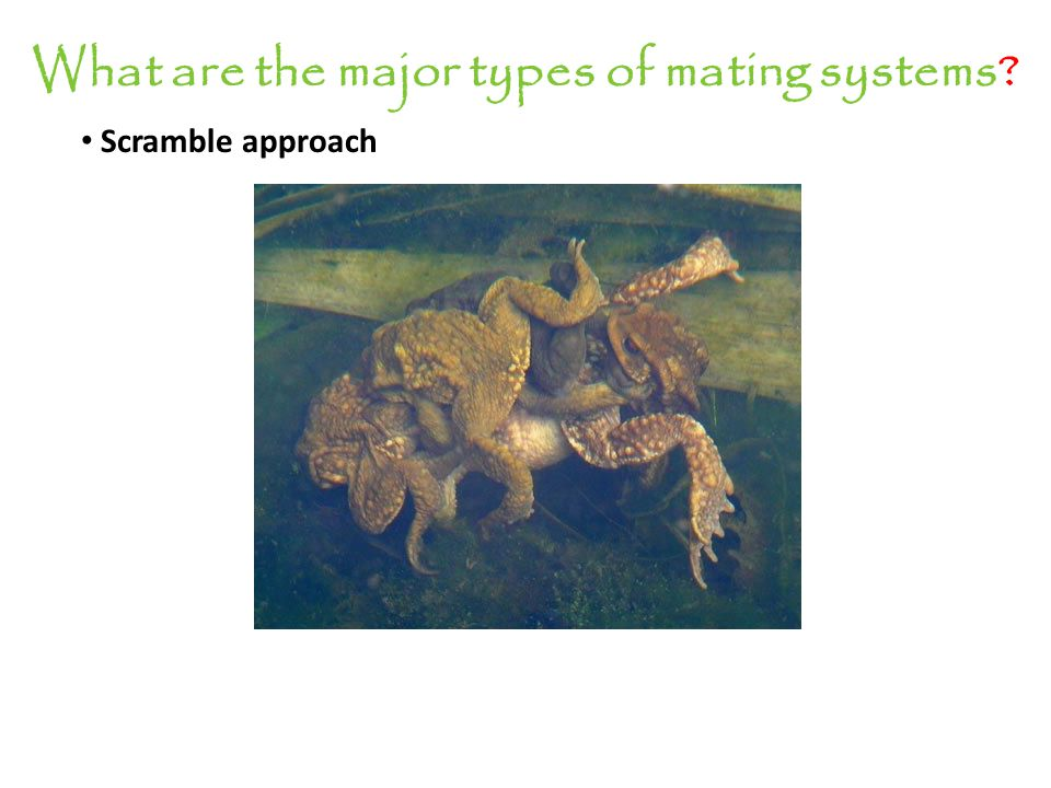 What are the major types of mating systems.