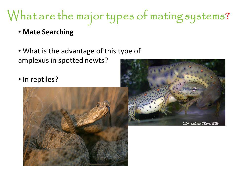 Sexual dimorphism? Gladiator frog pics!