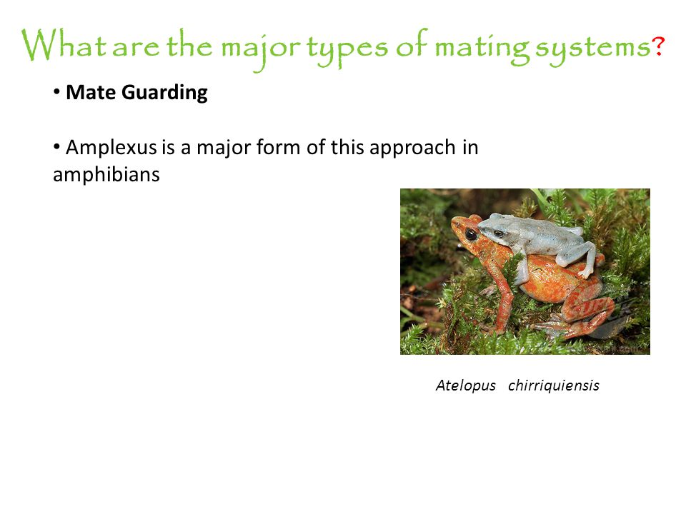 What are the major types of mating systems? Mate Guarding In reptiles?