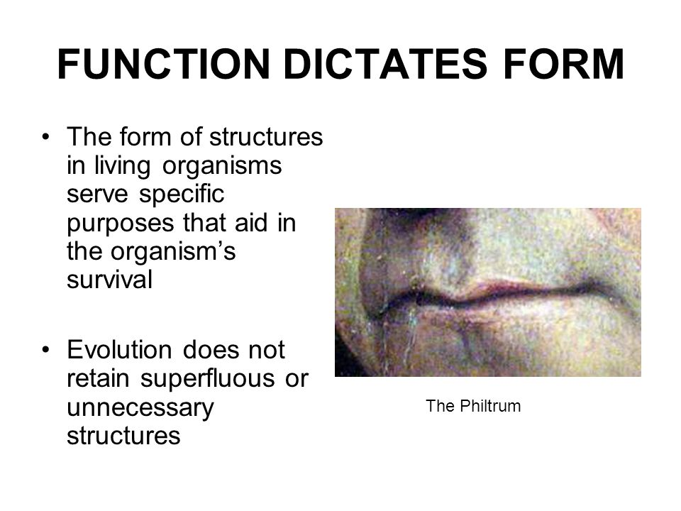 FUNCTION DICTATES FORM The form of structures in living organisms serve specific purposes that aid in the organism's survival Evolution does not retai