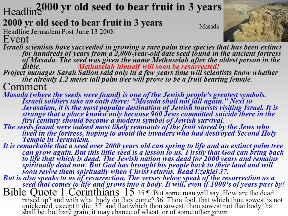 Headline 2000 yr old seed to bear fruit in 3 years Headline Jerusalem Post June 13 2008 Event Israeli scientists have succeeded in growing a rare palm tree species that has been extinct for hundreds of years from a 2,000-year-old date seed found in the ancient fortress of Masada.