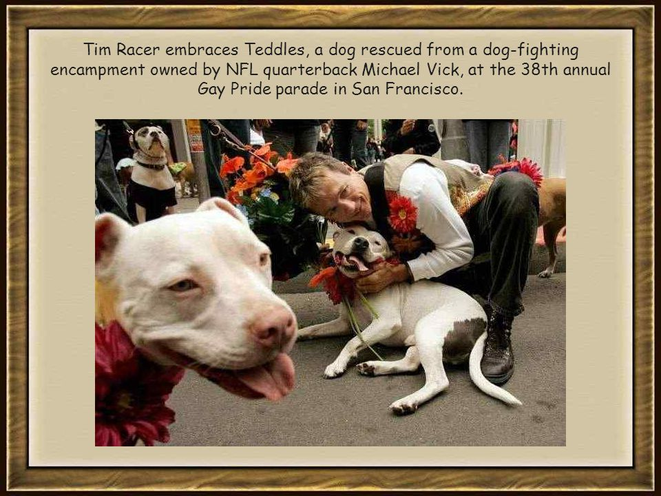 Tim Racer embraces Teddles, a dog rescued from a dog-fighting encampment owned by NFL quarterback Michael Vick, at the 38th annual Gay Pride parade in San Francisco.