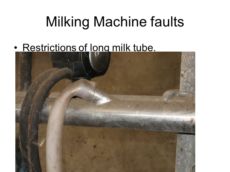 Milking Machine faults Restrictions of long milk tube.
