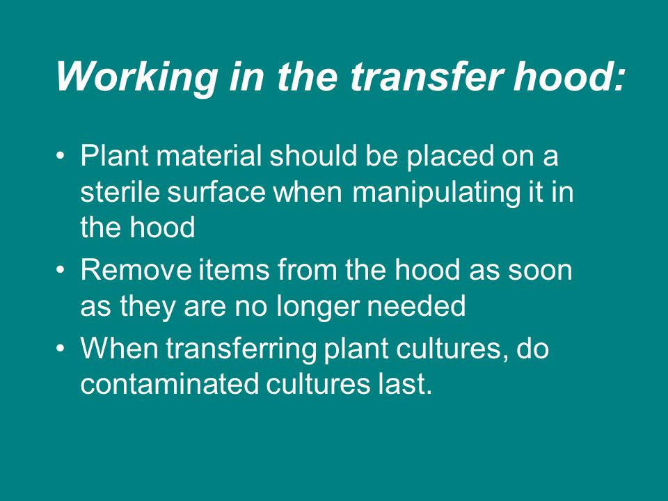 Working in the transfer hood: Plant material should be placed on a sterile surface when manipulating it in the hood Remove items from the hood as soon as they are no longer needed When transferring plant cultures, do contaminated cultures last.