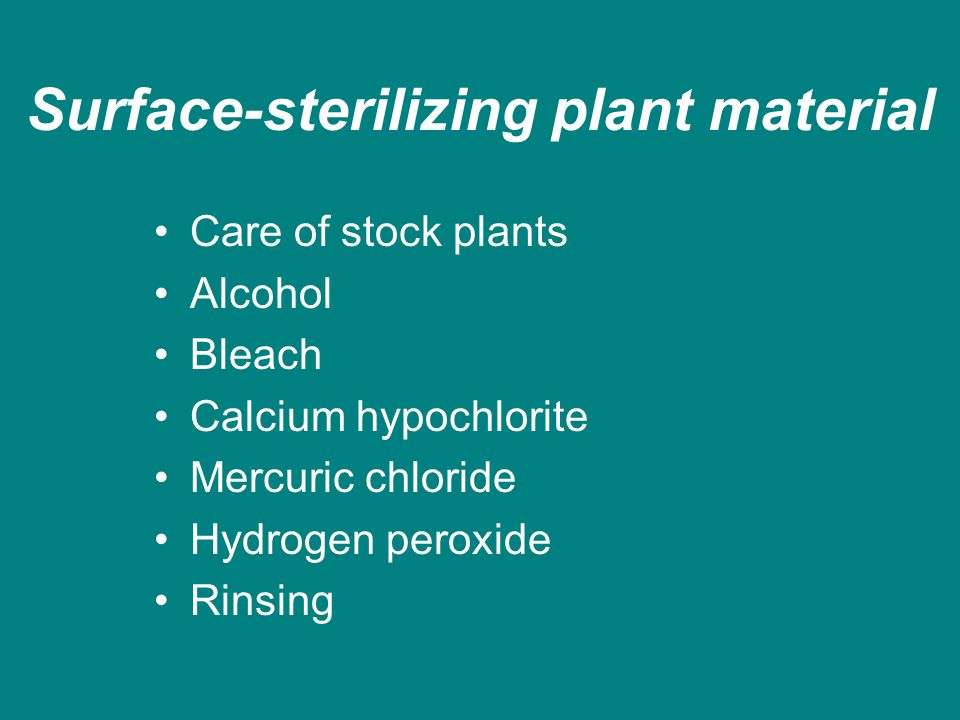 Surface-sterilizing plant material Care of stock plants Alcohol Bleach Calcium hypochlorite Mercuric chloride Hydrogen peroxide Rinsing