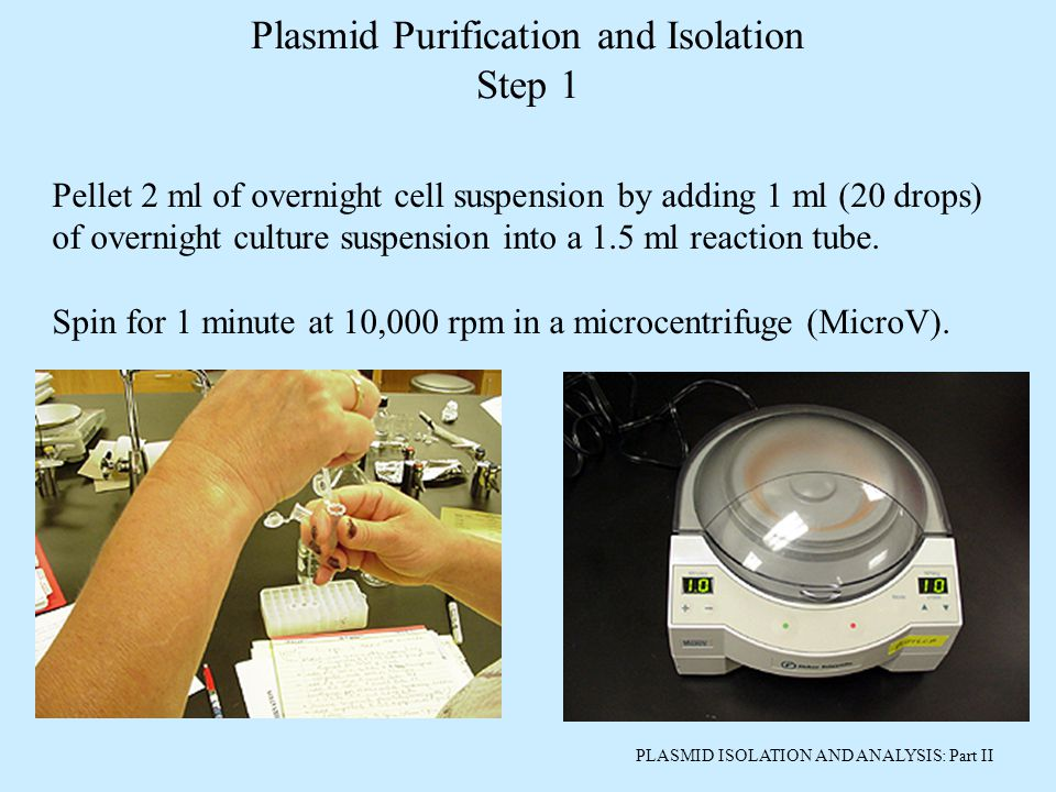 PLASMID ISOLATION AND ANALYSIS: Part II Pellet 2 ml of overnight cell suspension by adding 1 ml (20 drops) of overnight culture suspension into a 1.5