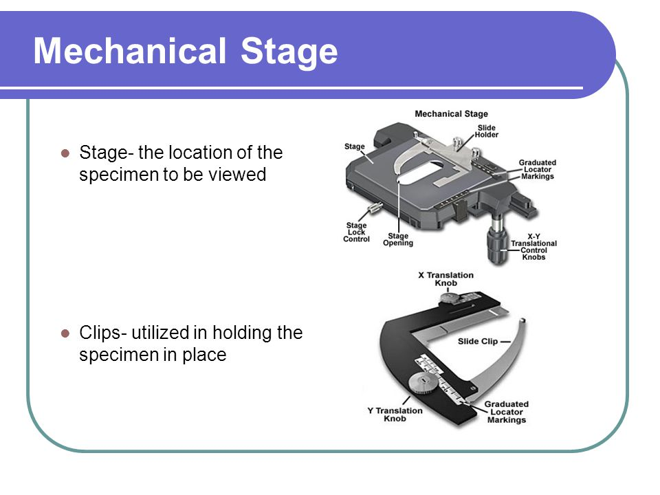 Mechanical Stage Stage- the location of the specimen to be viewed Clips- utilized in holding the specimen in place