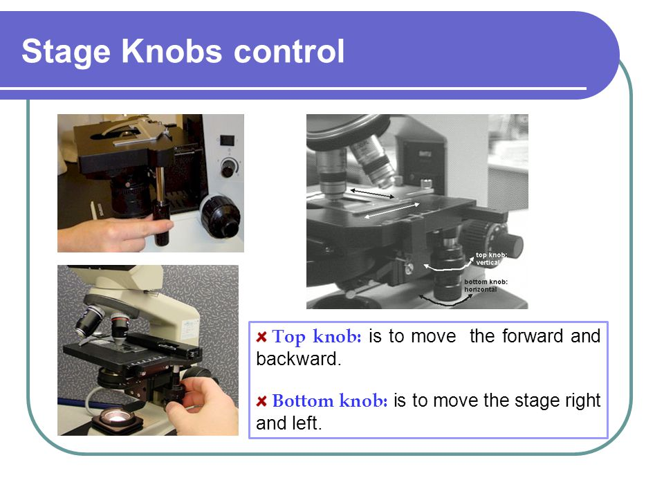 Stage Knobs control Top knob: is to move the forward and backward. Bottom knob: is to move the stage right and left.