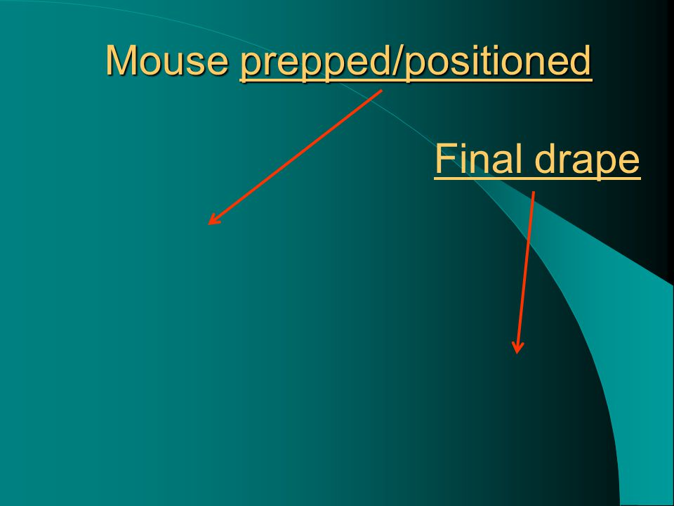 Mouse prepped/positioned Final drape