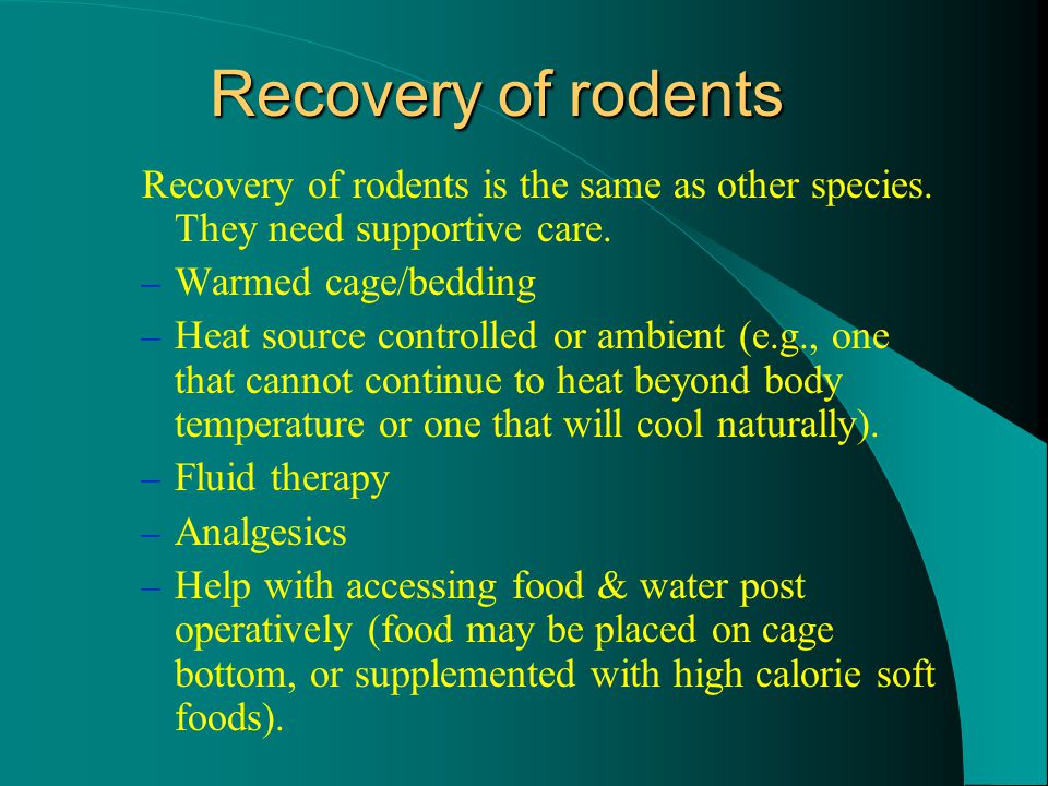 Recovery of rodents Recovery of rodents is the same as other species.