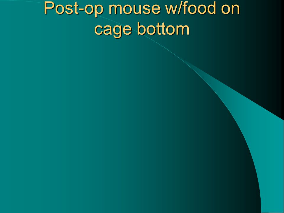 Post-op mouse w/food on cage bottom