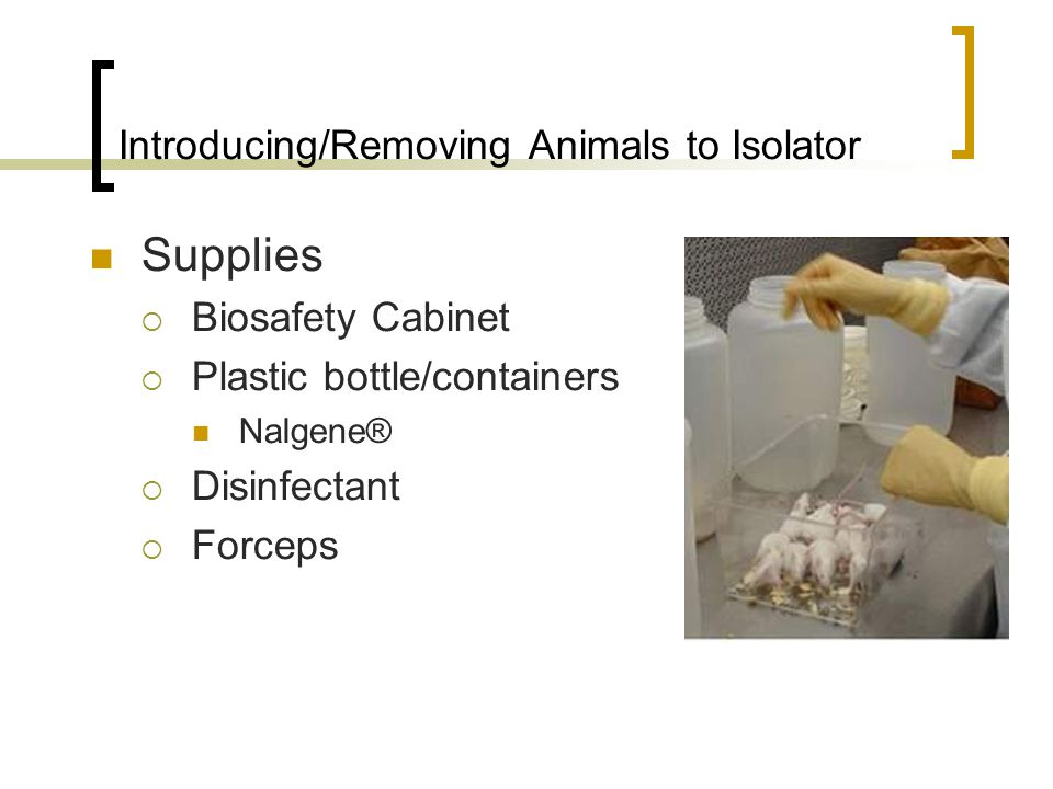Introducing/Removing Animals to Isolator Supplies  Biosafety Cabinet  Plastic bottle/containers Nalgene®  Disinfectant  Forceps