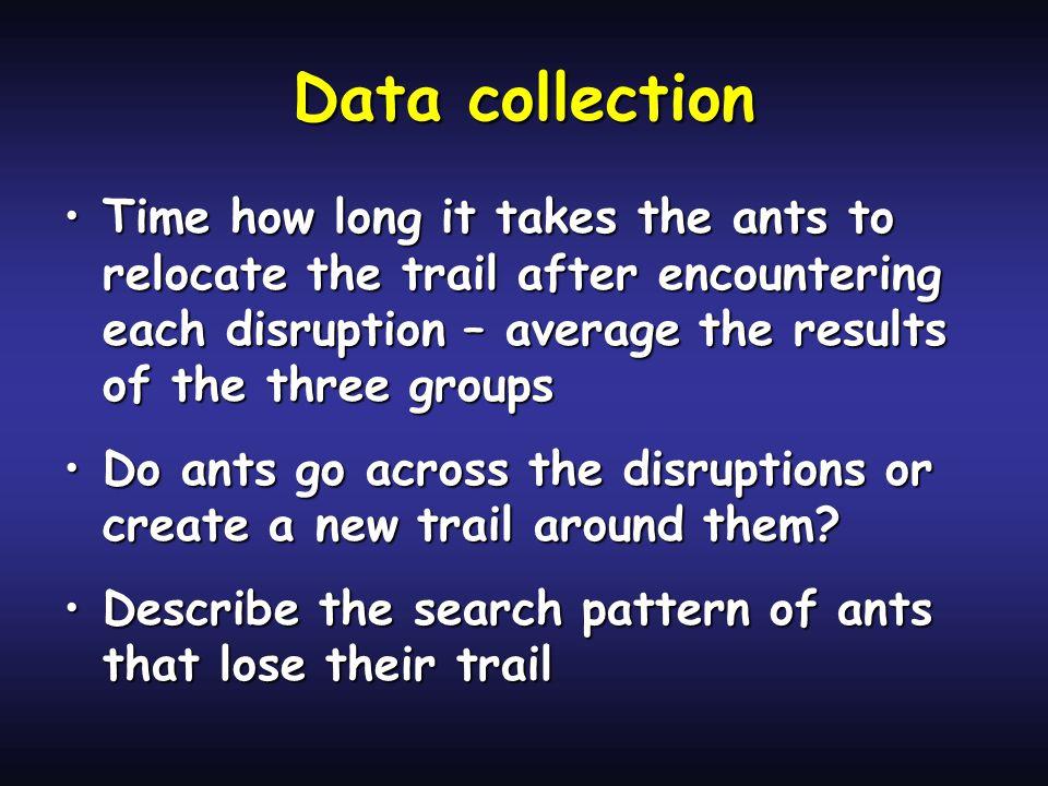 Data collection Time how long it takes the ants to relocate the trail after encountering each disruption – average the results of the three groupsTime how long it takes the ants to relocate the trail after encountering each disruption – average the results of the three groups Do ants go across the disruptions or create a new trail around them?Do ants go across the disruptions or create a new trail around them.