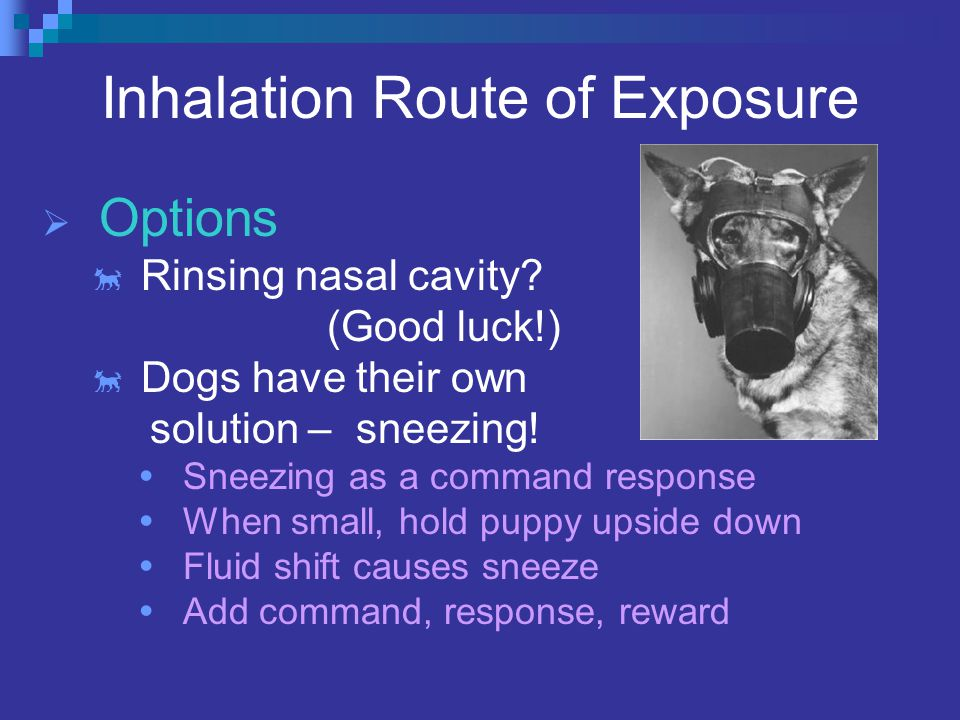 Inhalation Route of Exposure  Options  Rinsing nasal cavity.